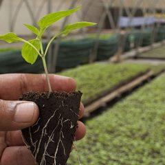 Agricoltura biodinamica: per vivere nel rispetto della natura