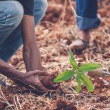 Natale green: adotta o regala un albero con Treedom!